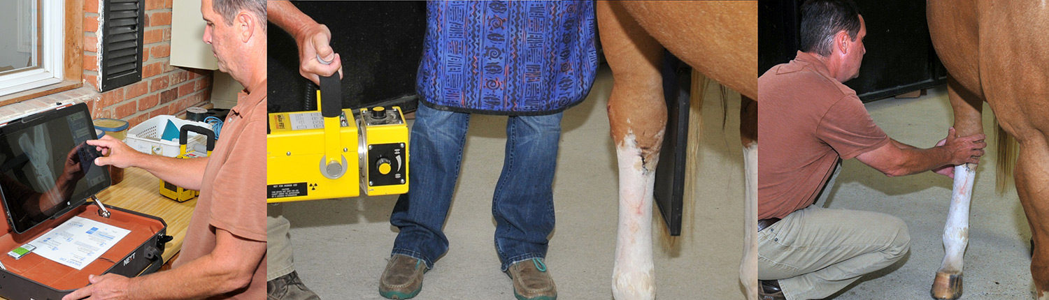Veterinary Care for Horses by Lebanon Equine Clinic
